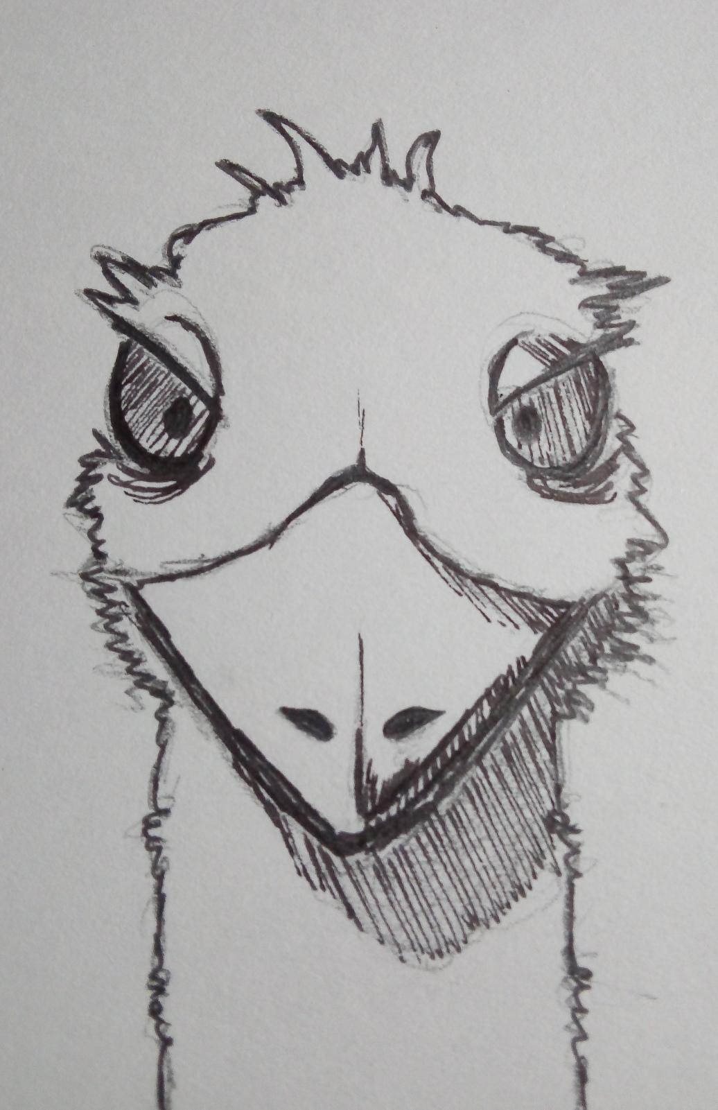 Emeu Baille